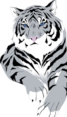 黑白猎户 素描老虎图片