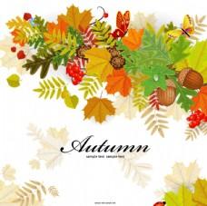 彩色的秋天枫叶落叶