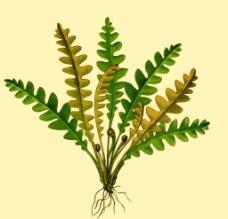 手绘分层蕨类植物图片