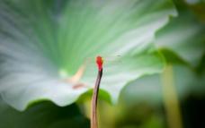 蜻蜓高清图图片