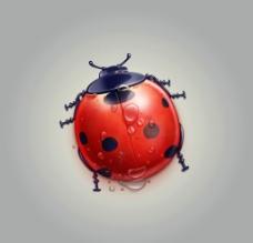 瓢虫图标临摹PSD图片