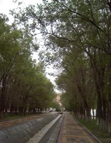 林荫小路图片
