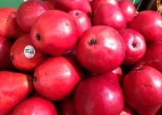 红啤梨图片