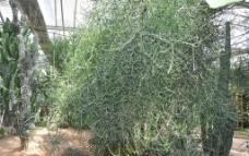 植物 景观图片