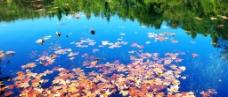 水上落叶图片