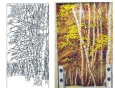 白桦树 树林图片