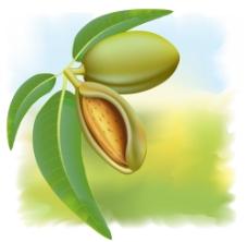 春天绿色成熟种子背景