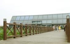 崇明东滩湿地图片