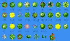 最齐全的灌木ps素材图片