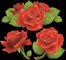 红色鲜艳玫瑰花
