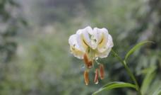 梵净山上的小花图片