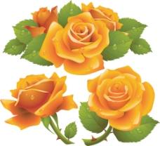 鲜艳玫瑰花背景