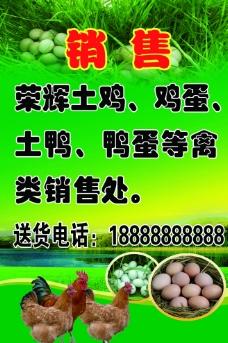 土鸡 土鸡蛋 鸭蛋禽类 海报图片