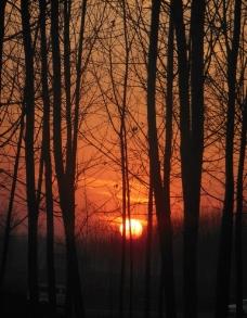 林中夕阳图片