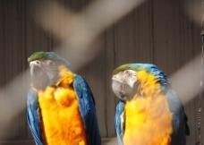 五彩缤纷的鸟图片