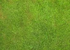 草地 草坪图片
