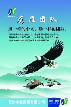 鹰雁团队执行力领导力图片