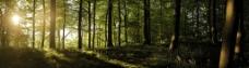 丛林中的阳光图片
