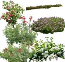 植物psd图片