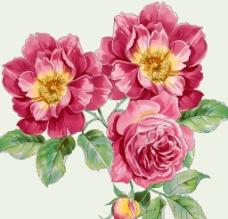 鲜花PSD图片