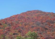 坡峰岭红叶图片